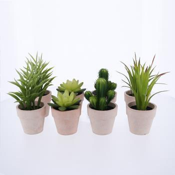 HA3428SET   多肉植物8個セット
