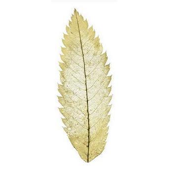 Leaf ART 30cm×40cm WT17-ER2733