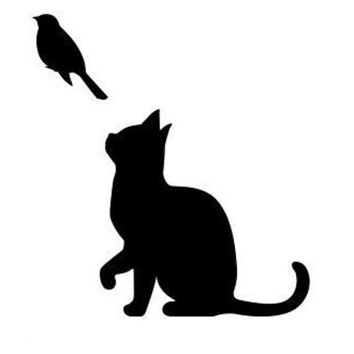 WS-CAT-01  CAT 鳥発見 148