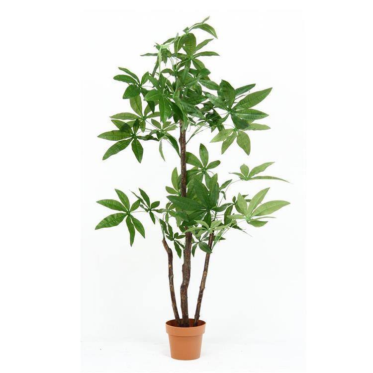 52666   観葉植物 パキラ スタンダード